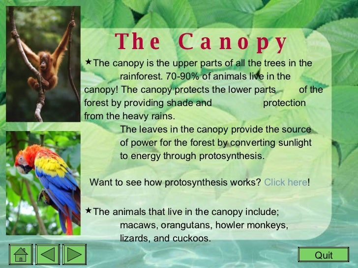 ... 5. The Canopy ...  sc 1 st  SlideShare & Rainforest Interactive Powerpoint