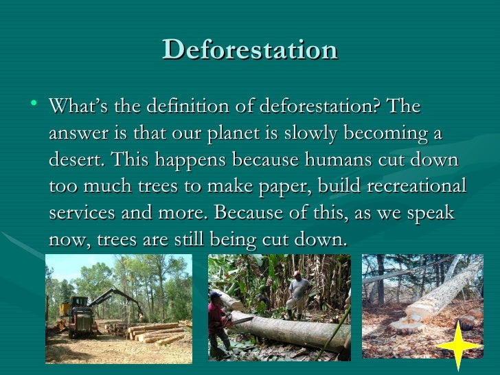 Disadvantages of Cutting Down the Rain Forest