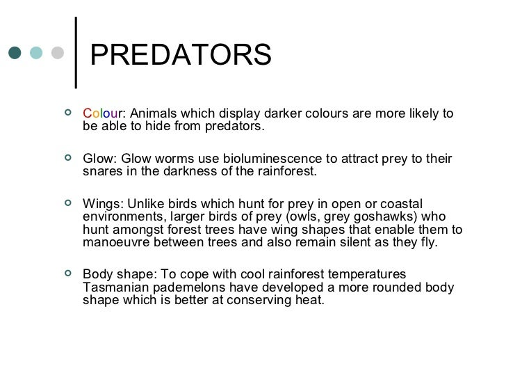 Rainforest animals and their adaptations