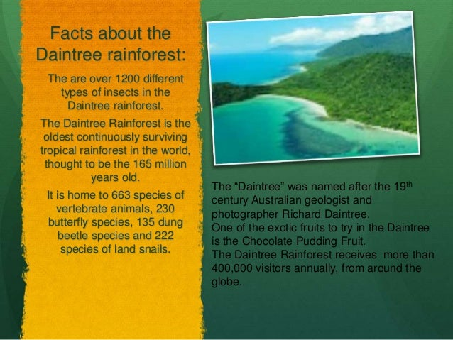 Rainforest Comparisons