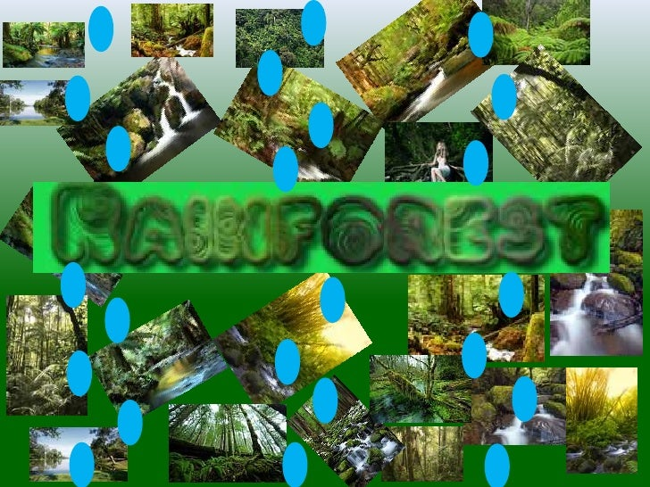The temperature in therainforest is usually always hot      and damp. The average   temperature is 25 degrees.Rainforests ...