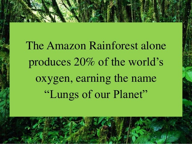 why are rainforests so important 1) introduction why is so much of the flora and fauna of the earth concentrated in only 6% of the land surface the answer is at least partially historical.
