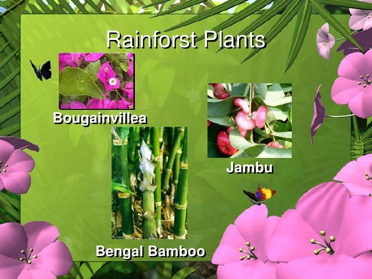 Pictures of Amazon Rainforest Plants And Names - #rock-cafe