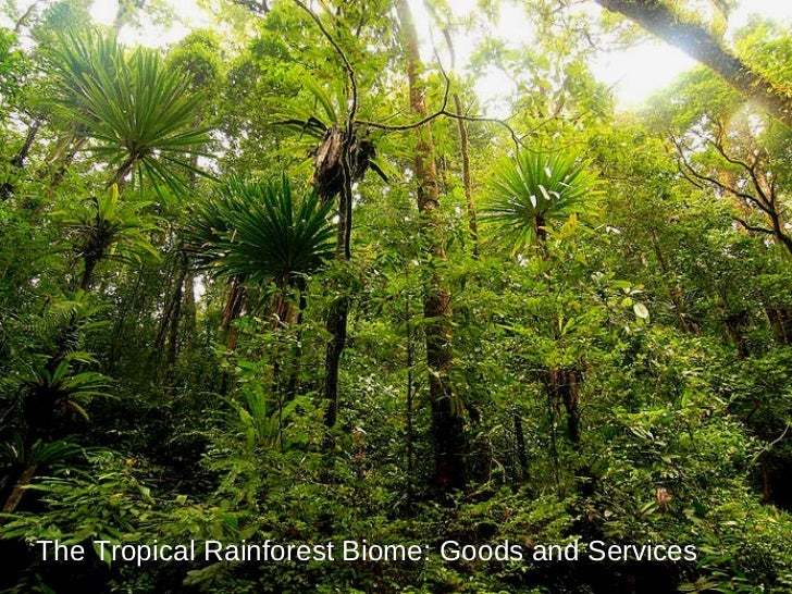 The Tropical Rainforest Biome: Goods and Services