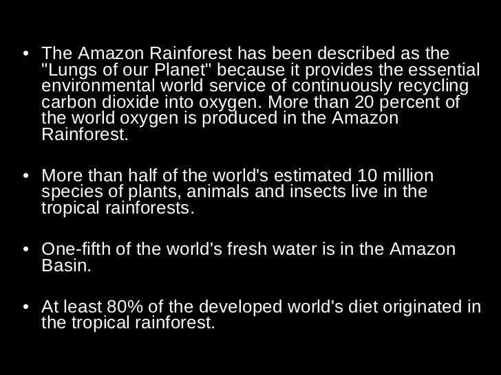Rainforest Importance