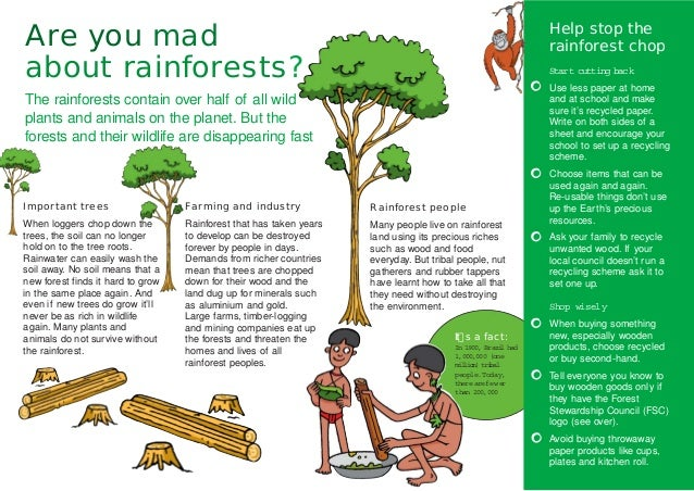 Mad About Rainforests