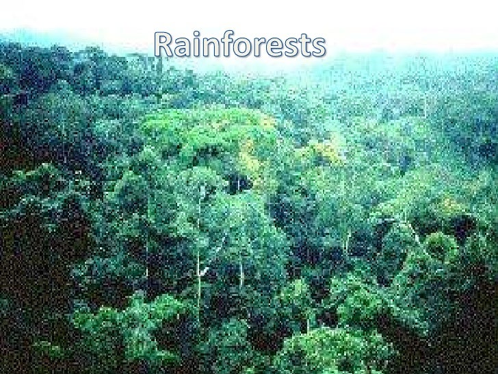What is rain forestsTropical rainforests are forests with tall trees,warm climates, and lots of rain. In somerainforests i...