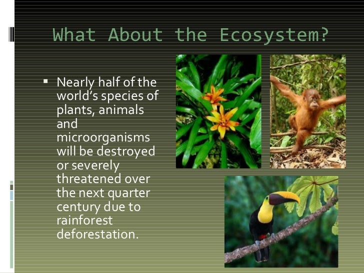 rainforest powerpoint 1
