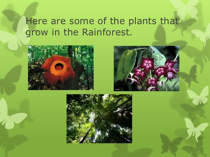 rainforest power point for 7th grade students