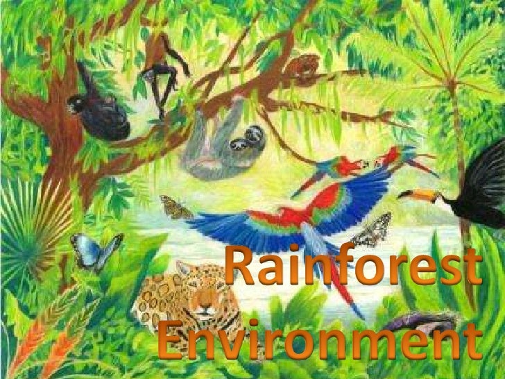 Rainforest<br />Environment<br />
