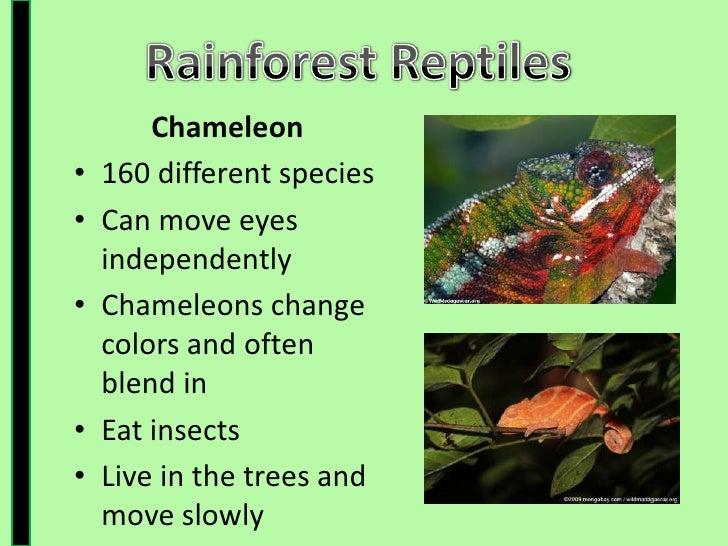 Rainforest Presentation