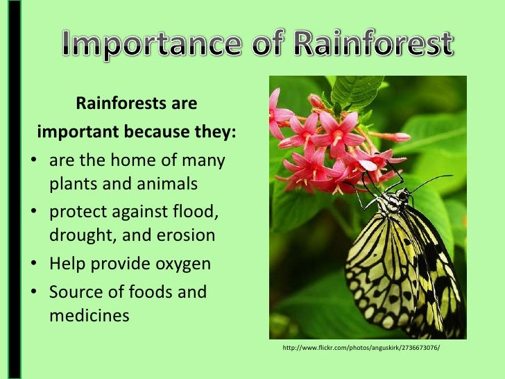 Rainforest Presentation