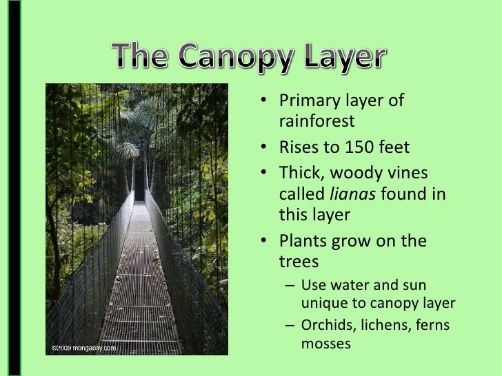 Rainforest floor layer facts thefloors co for Forest floor definition