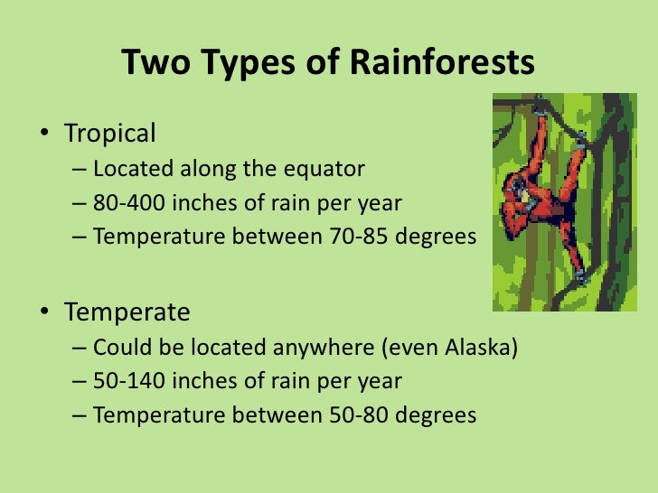 why are rainforests so important The tropical rainforest contains far more species of plants and animals than any other biome they cover approximately six per cent of the earth's surface, and because they get 2,000 mm of rain per year and temperatures range from around 27 to 32 c, conditions are wet and hot all year round so it.