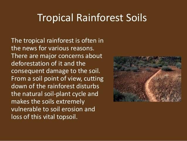 IBDP Geography HL Rainforests