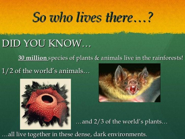 So who lives there…? <ul><li>DID YOU KNOW… </li></ul><ul><li>30 million  species of plants & animals live in the rainfores...