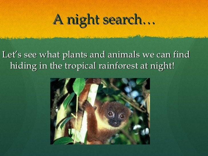 A night search… <ul><li>Let's see what plants and animals we can find hiding in the tropical rainforest at night! </li></ul>