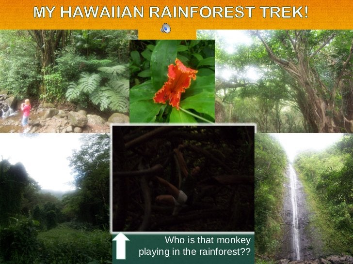 Who is that monkey playing in the rainforest??