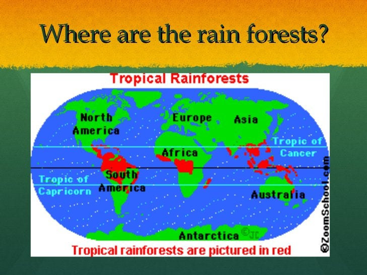 Where are the rain forests?