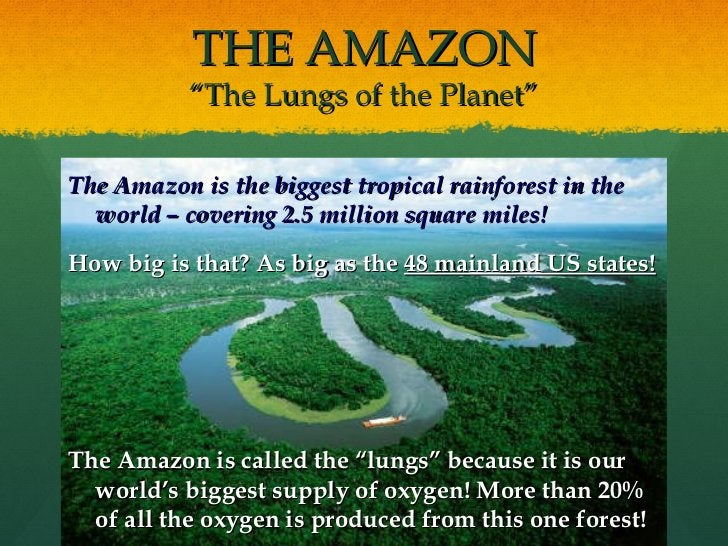 """THE AMAZON """"The Lungs of the Planet"""" <ul><li>The Amazon is the biggest tropical rainforest in the world – covering 2.5 mil..."""