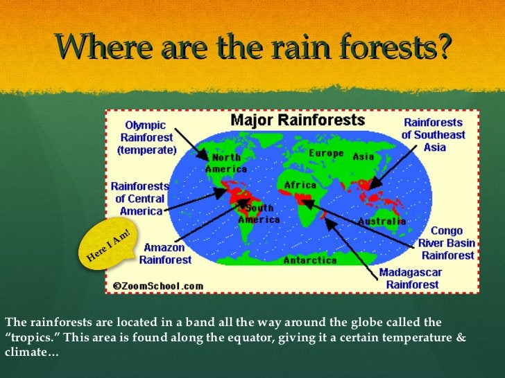 """Where are the rain forests? Here I Am! The rainforests are located in a band all the way around the globe called the """"trop..."""