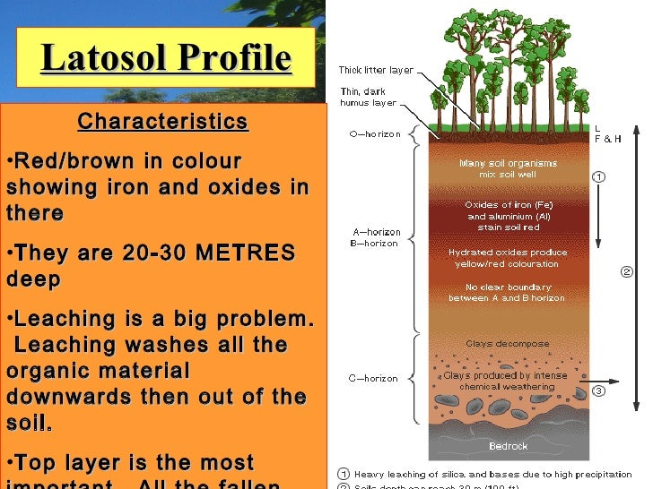 Rainforests Lesson 1&2