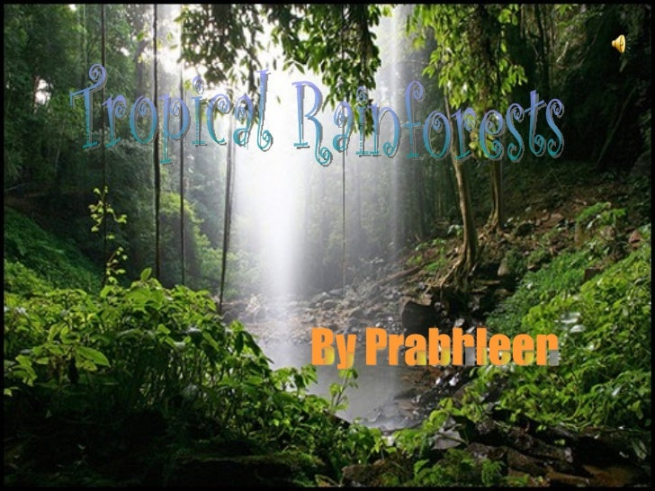 Tropical Rainforests By Prabhleen