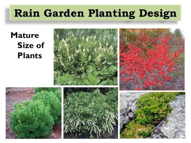rain garden design, installation and maintenance