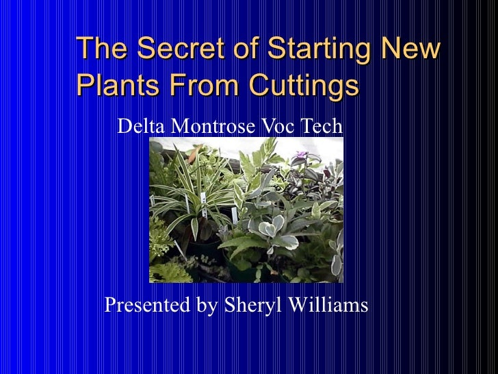 The Secret of Starting New Plants From Cuttings Delta Montrose Voc Tech Presented by Sheryl Williams