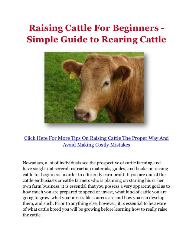 Raising Cattle For Beginners -  Simple Guide to Rearing CattleClick Here For More Tips On Raising Cattle The Proper Way An...