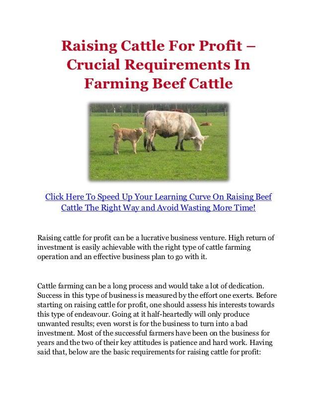 Business plan raising beef cattle top school essay editing websites for college