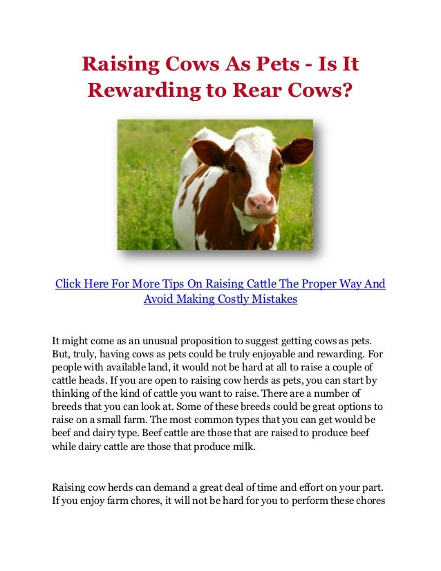 Raising Cows As Pets - Is It      Rewarding to Rear Cows?Click Here For More Tips On Raising Cattle The Proper Way And    ...