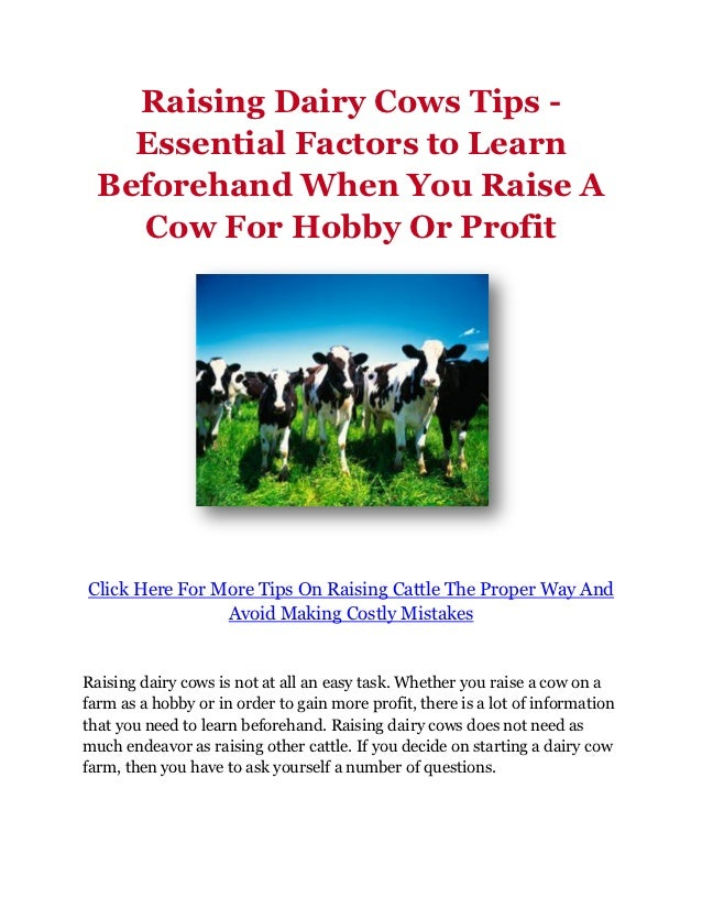 Raising Dairy Cows Tips -    Essential Factors to Learn  Beforehand When You Raise A    Cow For Hobby Or ProfitClick Here ...