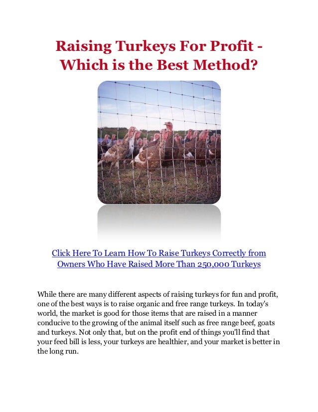 Raising Turkeys For Profit -     Which is the Best Method?    Click Here To Learn How To Raise Turkeys Correctly from     ...