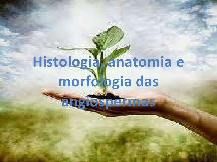 Histologia, anatomia e morfologia das angiospermas