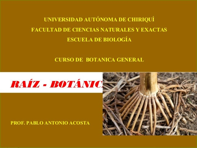UNIVERSIDAD AUTÓNOMA DE CHIRIQUÍ FACULTAD DE CIENCIAS NATURALES Y EXACTAS ESCUELA DE BIOLOGÍA CURSO DE BOTANICA GENERAL RA...