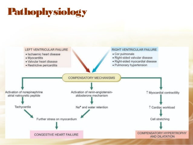 Pathophysiology Of Congestive Heart Failure