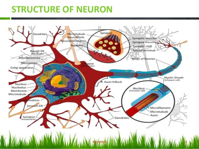 classification of nerve fibers pdf