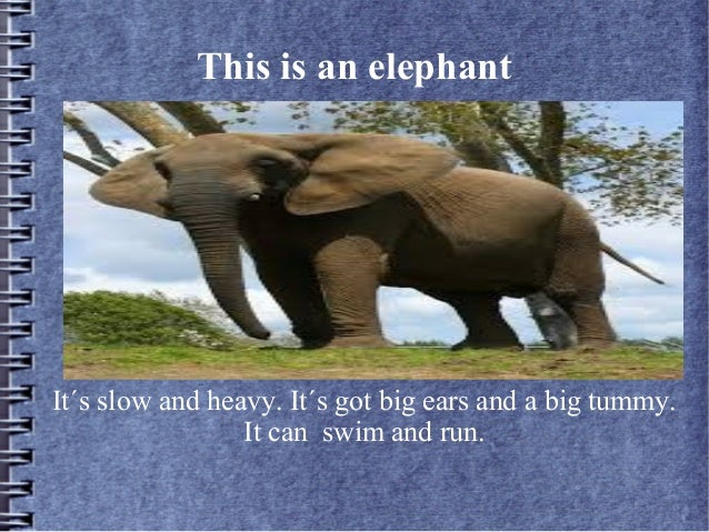 This is an elephantIt´s slow and heavy. It´s got big ears and a big tummy.It can swim and run.
