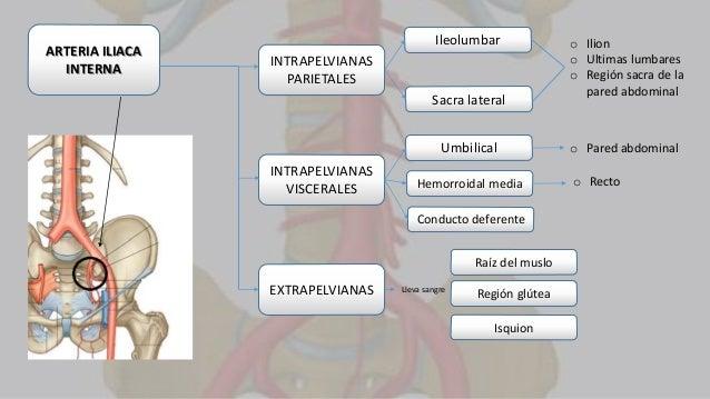 Ramas terminales de la aorta abdominal