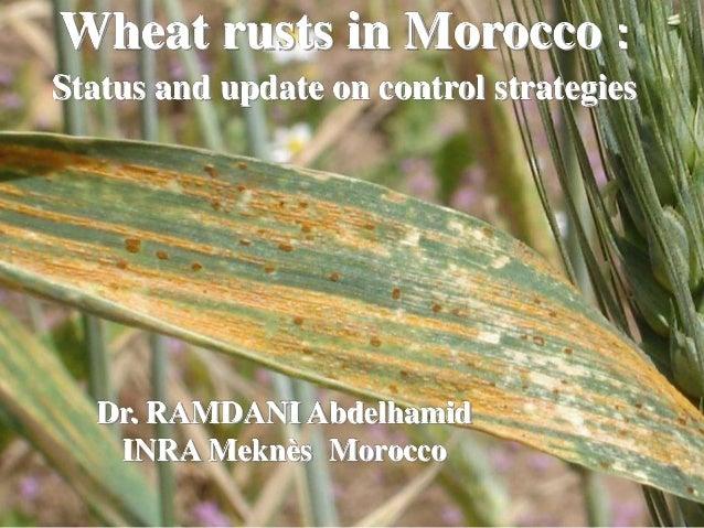 Wheat rusts in Morocco : Status and update on control strategies Dr. RAMDANI Abdelhamid INRA Meknès Morocco