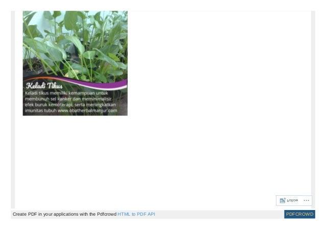 Ramuan herbal penyakit kanker payudara