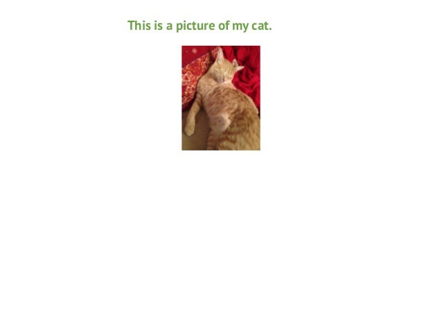 This is a picture of my cat.