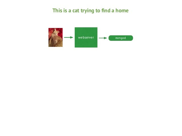 This is a cat trying to find a home  webserver  mongod