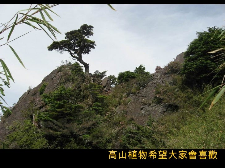 高山植物希望大家會喜歡