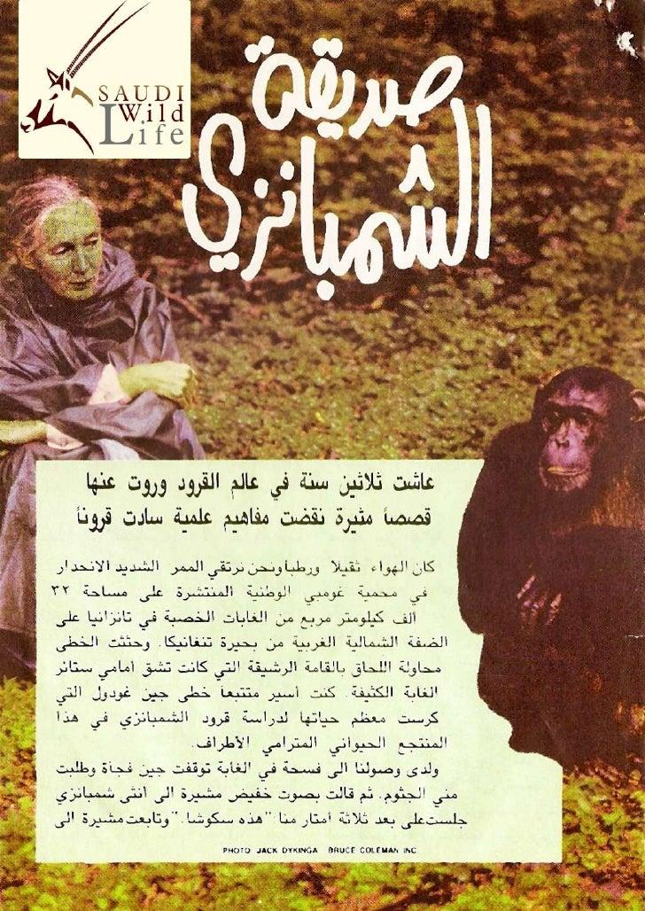 صديقة الشمبانزي