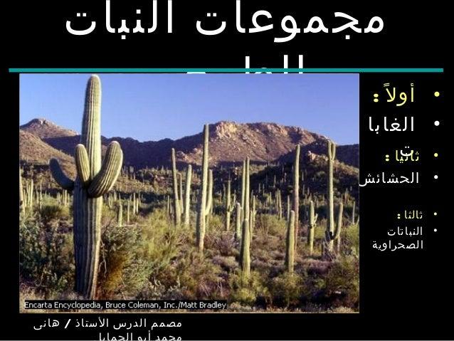 Aarda Info الصور والأفكار حول درس النباتات الطبيعية في الوطن العربي