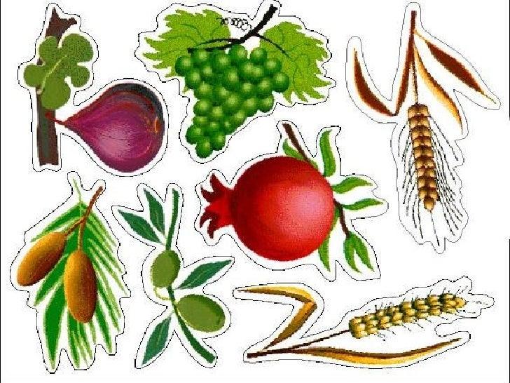 שבעת המינים