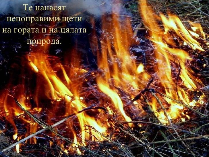 Те нанасят непоправими щети на гората и на цялата природа.