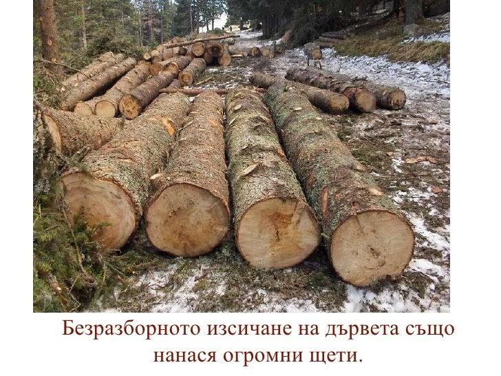 Безразборното изсичане на дървета също нанася огромни щети.